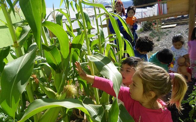 """En plenos preparativos para comenzar con la siembra está el equipo educativo del Jardín Infantil """"Nuevo Amanecer"""" de la comuna de Cabildo."""