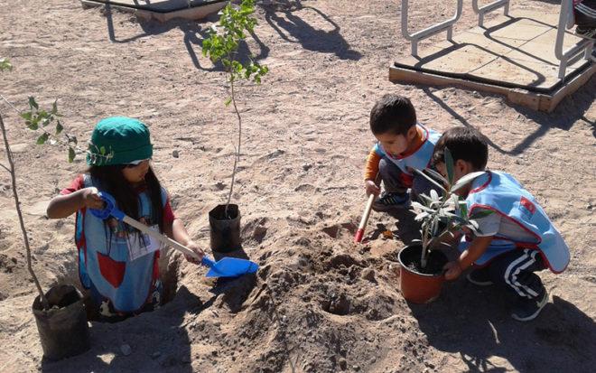 La idea surgió tras la visita de los párvulos al sector de casas tutelares, percatándose que en el lugar hacían falta algunos árboles, por lo que los niños y niñas entusiastas y alegres quisieron participar de la iniciativa.