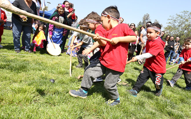 Niñas y niños, provenientes de 22 jardines infantiles interculturales de la JUNJI, llegaron al Parque Mapuhue de La Pintana para participar de la VIII versión del Encuentro Regional de Palín Pichikeche y practicar este juego ancestral mapuche.