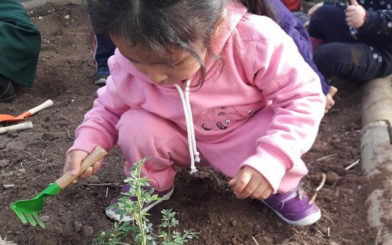 En el Día Mundial del Medio Ambiente, la Junji Metropolitana releva su relación de casi 20 años con el ecosistema a través de experiencias significativas de aprendizaje como el contacto con la naturaleza, el cultivo, la utilización de recursos naturales, y el reciclaje.